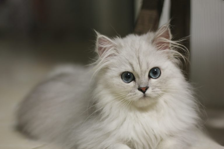 pet inheritance